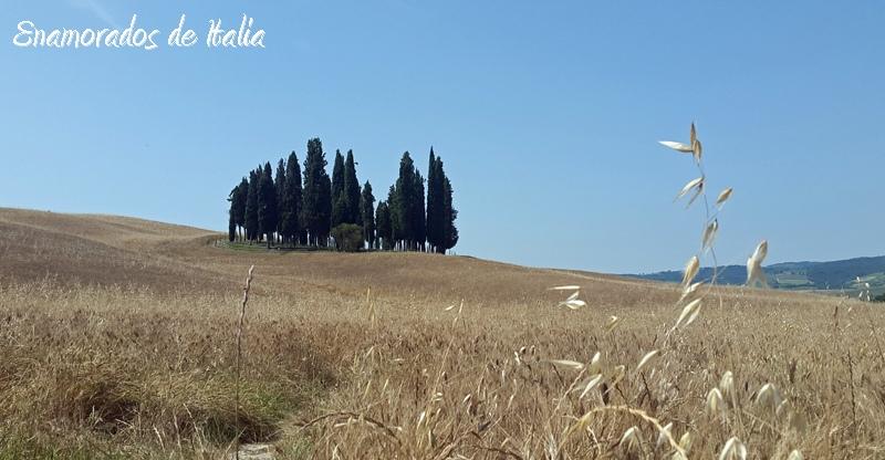 Cipreses cerca de Quirico d'Orcia, Toscana.