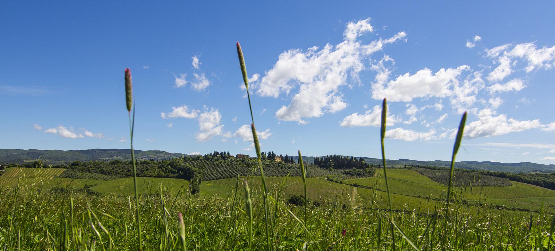 Panorama Tenuta di Bibbiano, Toscana, Chianti Classico.