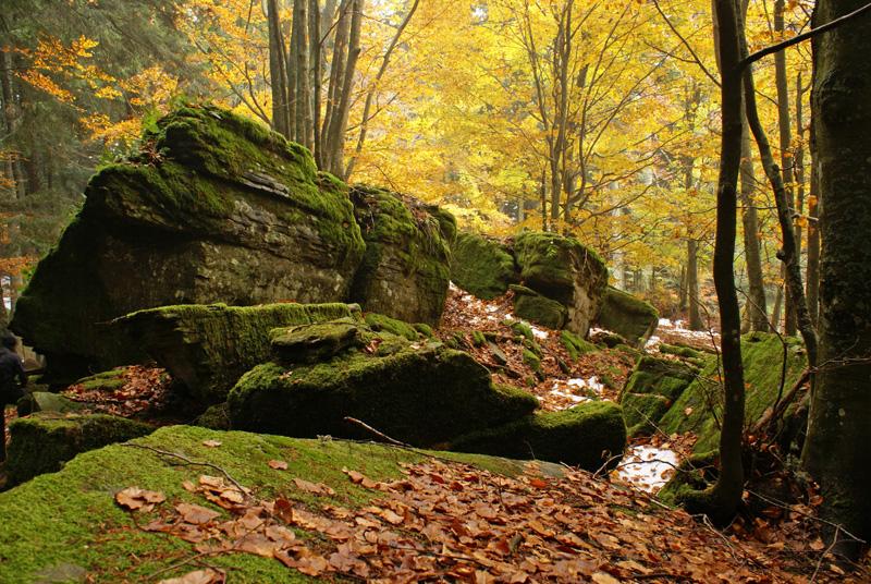 Parco delle Foreste Casentinesi, Toscana.