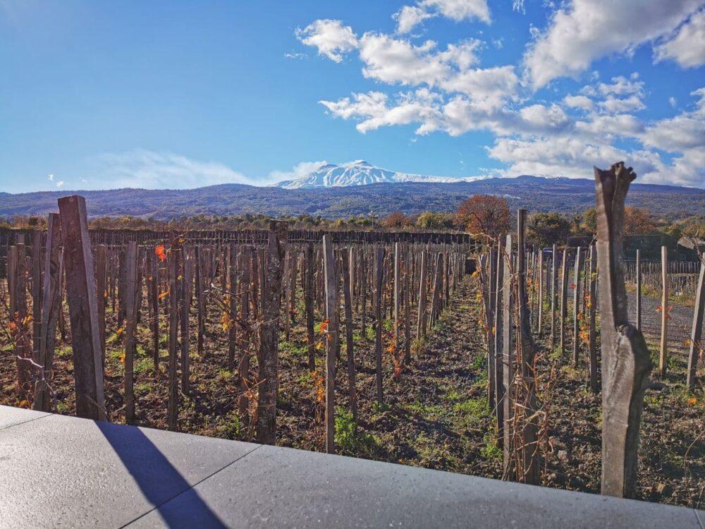 Winetasting Vino Etna Sicilia